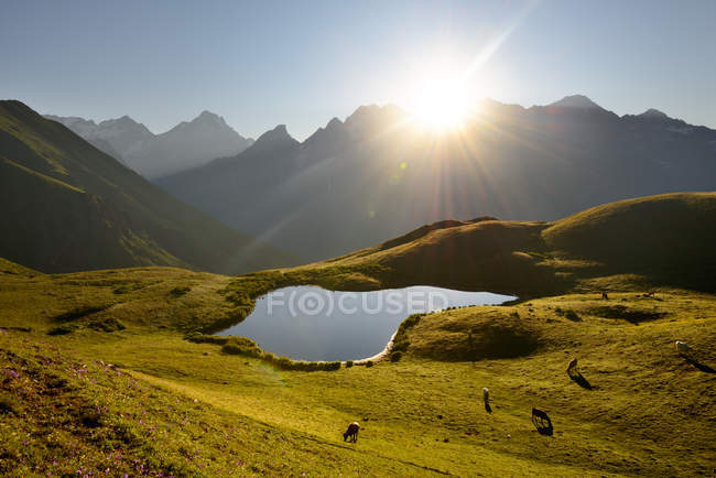 Koruldi Lake and grazing cows in sunlight, Caucasus, Svaneti, Georgia — Stock Photo