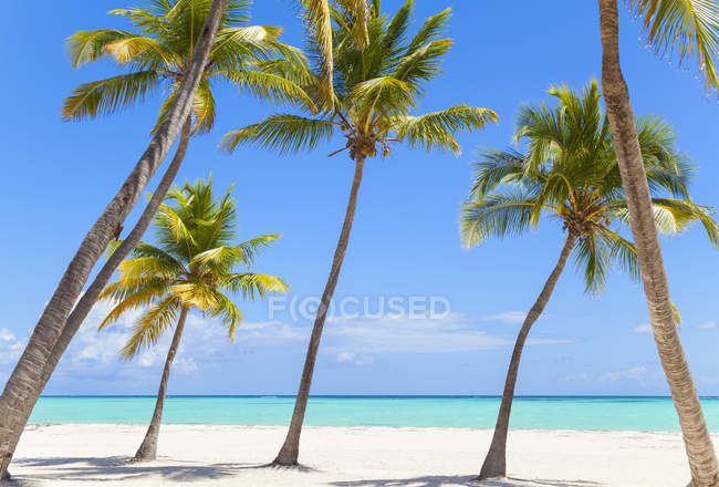 Leaning palm trees on beach, Dominican Republic, The Caribbean — Stock Photo