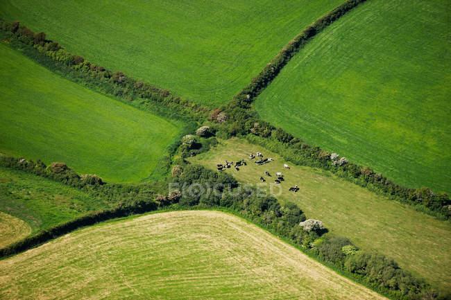 Английский сельскохозяйственных полей — стоковое фото