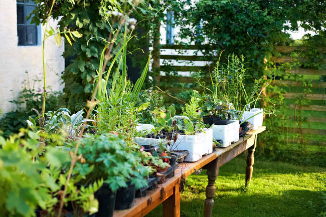 Potted plants on table — Stock Photo