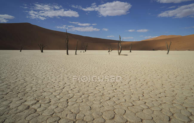 Cracked clay pan with distant dead trees and sand dunes, Deaddvlei, Sossusvlei National Park, Namibia — Stock Photo