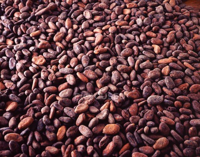 Перегляд повного кадру сирого какао-боби, шоколад інгредієнт — стокове фото