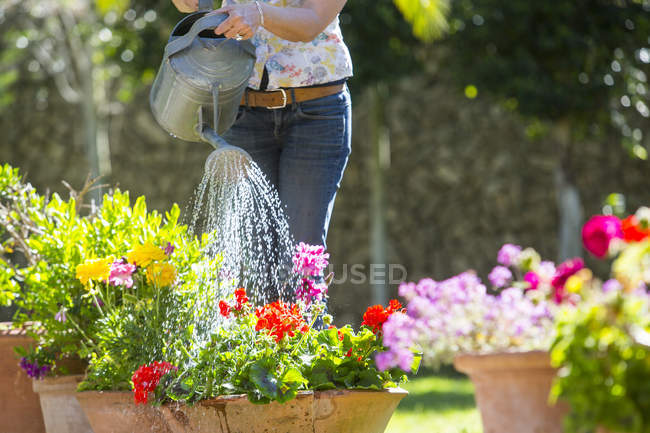Cropped view of woman watering flower pots in garden — Stock Photo
