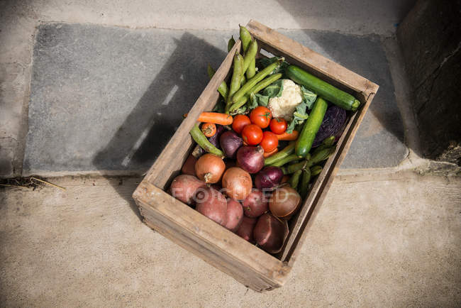 Box of organic vegetables — Stock Photo