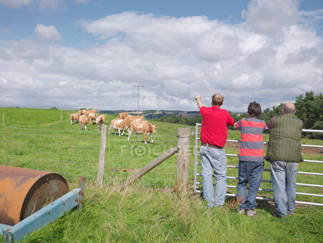 Agricoltore e figli con mucche Guernsey — Foto stock
