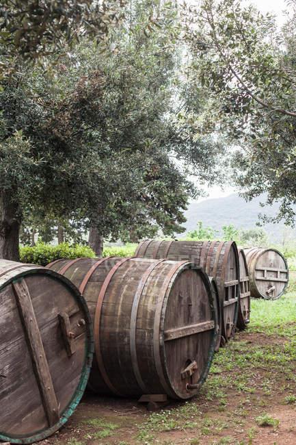 Barris de madeira e oliveiras — Fotografia de Stock