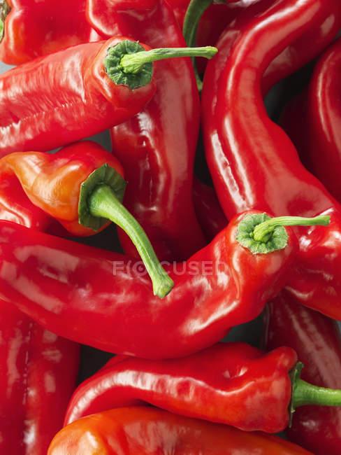 Mucchio di peperoni rossi appena raccolti, primo piano colpo — Foto stock