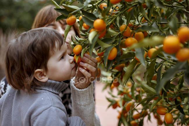 Mutter und Tochter riechen Orangen am Baum — Stockfoto