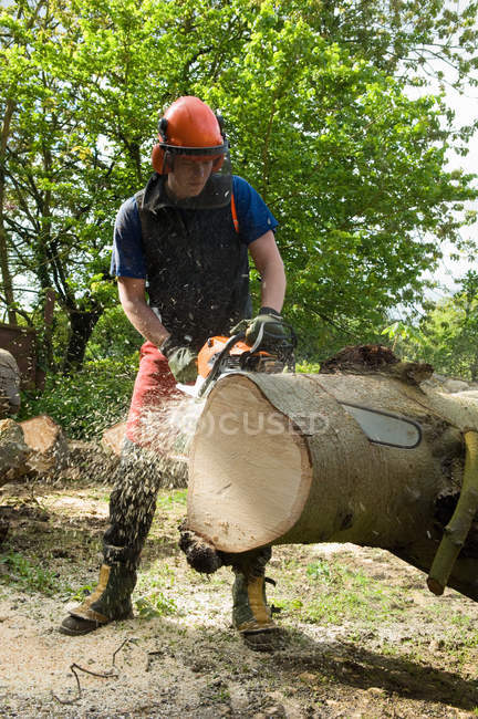 Young male tree surgeon using chainsaw on tree trunk — Stock Photo