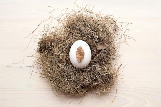 Egg in birds nest — Stock Photo