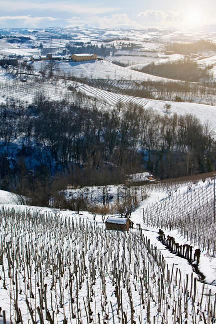 Arbres qui poussent sur la colline rural snowy — Photo de stock