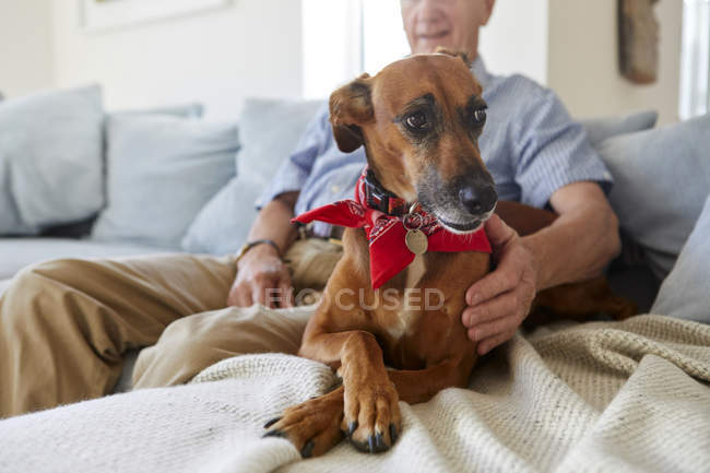 Dog relaxing with owner on sofa — Stock Photo