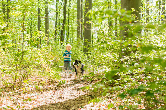 Boy walking with dog in forest — Stock Photo