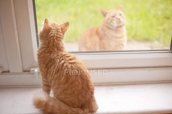 Ingwer-Kater mit Blick vom Fensterbrett, während ein anderes Ingwer Kater — Stockfoto