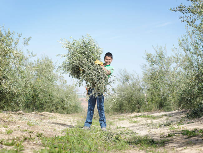 Boy holding bunch of olive tree branches — Stock Photo
