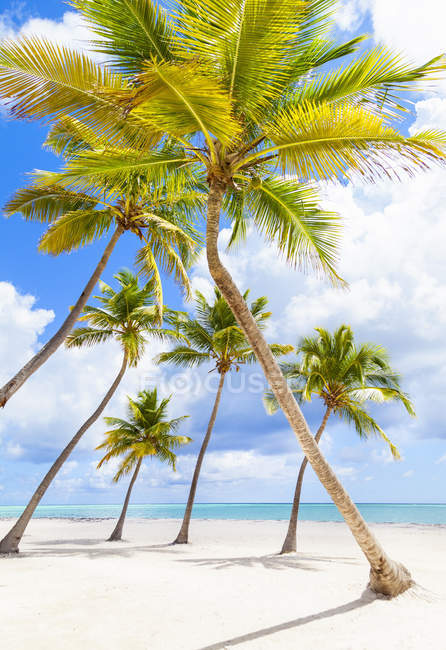 Palm trees leaning toward each other on beach, Dominican Republic, The Caribbean — Stock Photo