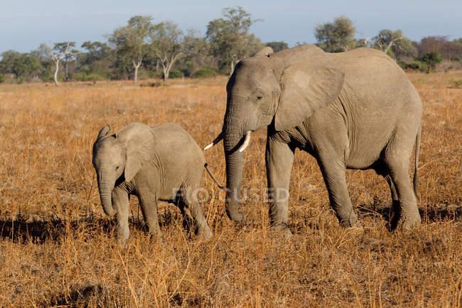 Mutter und Elefantenbaby — Stockfoto