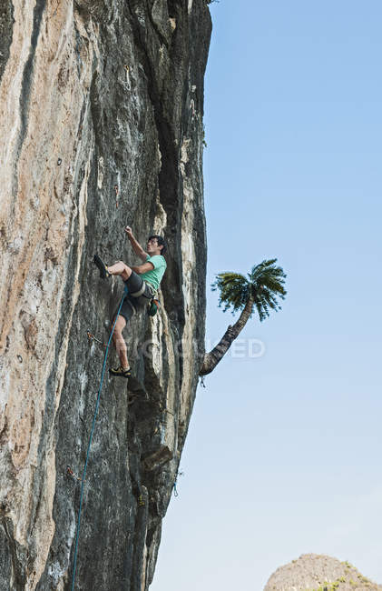 Low angle view of rock climber climbing rock face, Thakhek, Laos — Stock Photo