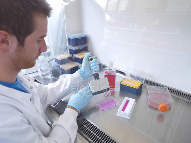 Scientist using multi well pipette to fill multi well plate in biological safety cabinet in laboratory — Stock Photo