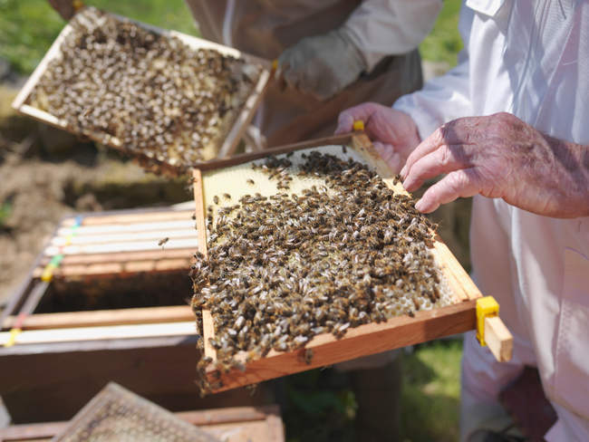Beekeepers with honey combs — Stock Photo