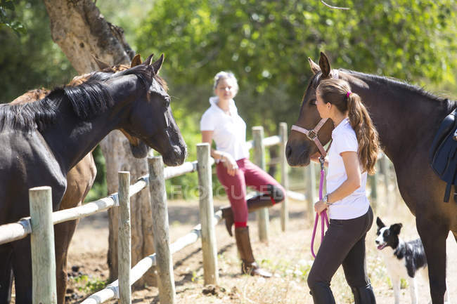 Самка женихов ведущих лошадь Паддок на сельских конюшни — стоковое фото