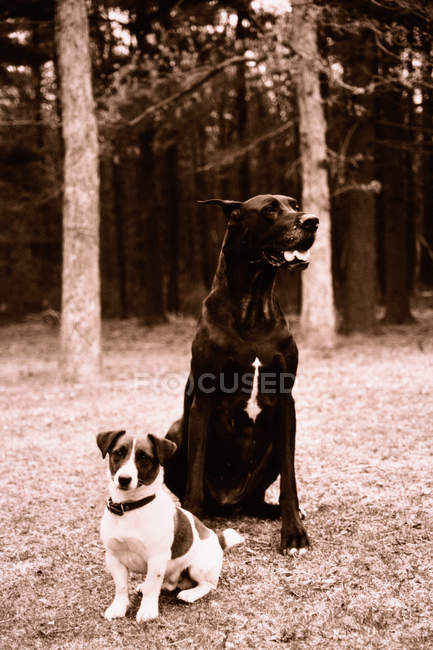 Petits et grands chiens dans le parc — Photo de stock