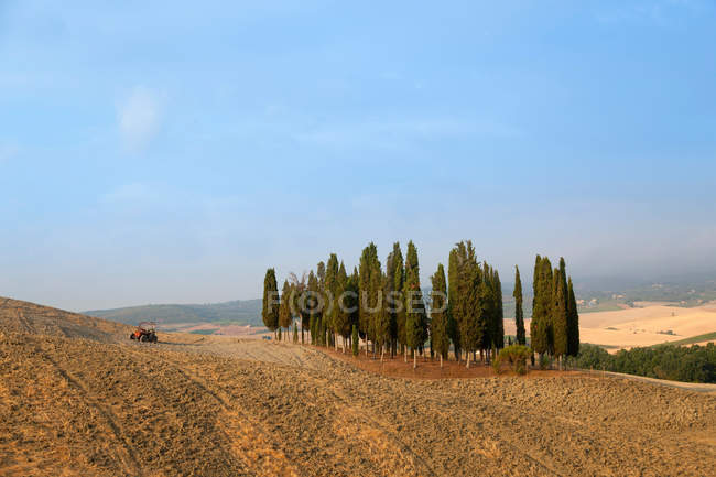 Cipreste toscano árvores na paisagem empoeirada — Fotografia de Stock