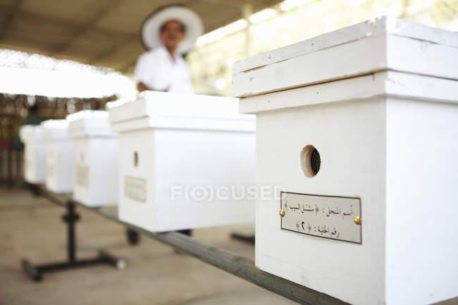 Apiculteur et boîtes de nuc dans le rucher, Seeb, Muscat, Oman, Moyen-Orient — Photo de stock