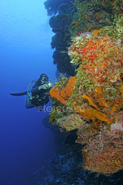Plongée dans le récif de Palancar, Cozumel, Mexique — Photo de stock