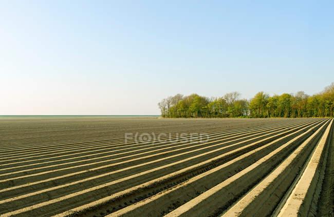 Vista panorâmica dos campos arados, Espel, Noordoostpolder, Países Baixos — Fotografia de Stock