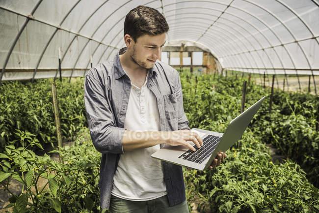 Hombre en polytunnel usando el ordenador portátil - foto de stock