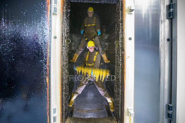 Workers placing haddock fillets inside smoke house in food factory — Stock Photo