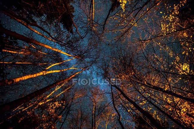 Низкий угол обзора освещенных деревьев ночью — стоковое фото