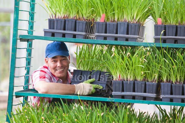 Assistente di vendita maturo che organizza scaffali di piante nel centro del giardino — Foto stock