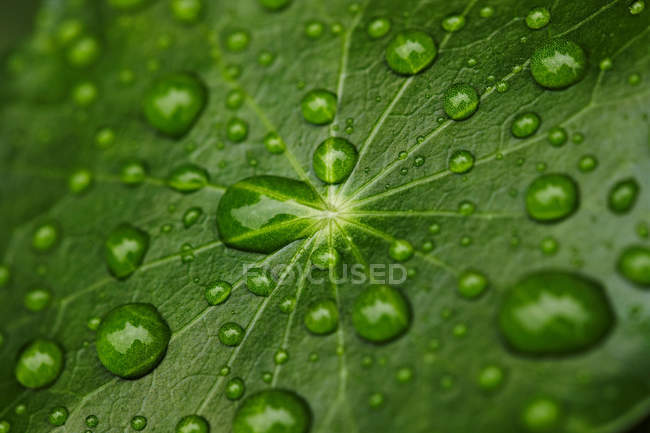 Water droplets on leaf — Stock Photo