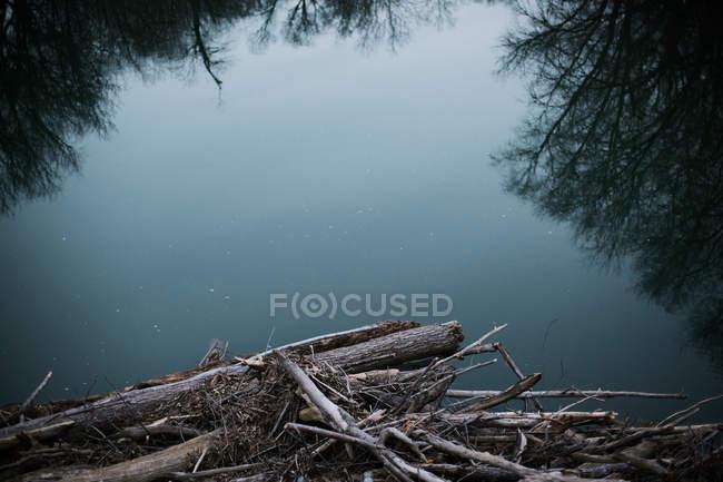 Tree debris on river bank — Stock Photo