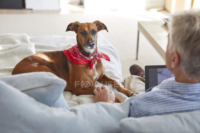Chien regarder propriétaire à l'aide de tablette numérique sur canapé — Photo de stock