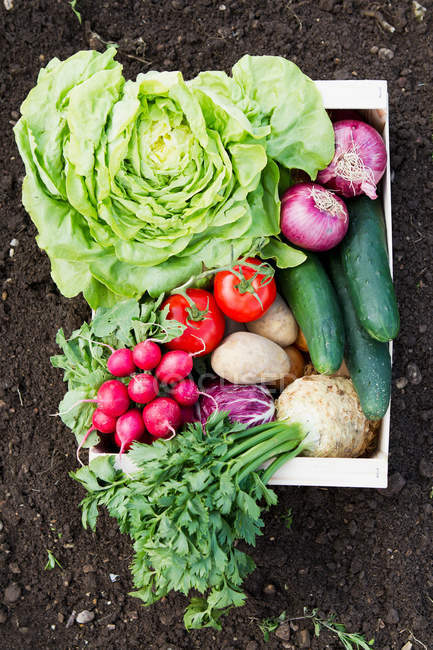 Box of fresh vegetables — Stock Photo