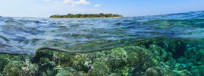 Korallenriff und Wasseroberfläche — Stockfoto