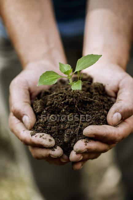 Mani maschili tenendo il terreno con piantina di semenzaio — Foto stock