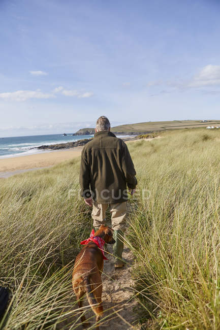 Chien de compagnie ambulant sur les dunes de sable, Constantine Bay, Cornwall, Royaume-Uni — Photo de stock