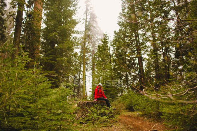 Hiker resting on tree stump, Sequoia National Park, California, USA — Stock Photo