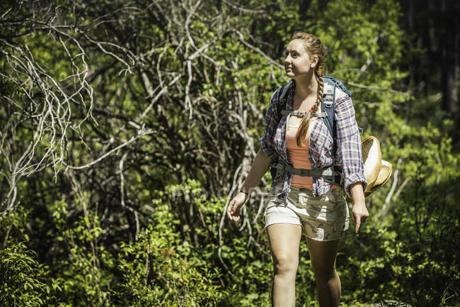 Young female hiker hiking in forest, Red Lodge, Montana, USA — Stock Photo