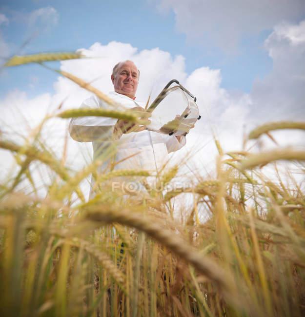 Vista de ángulo bajo de científico con cebada (Hordeum vulgare) en campo - foto de stock