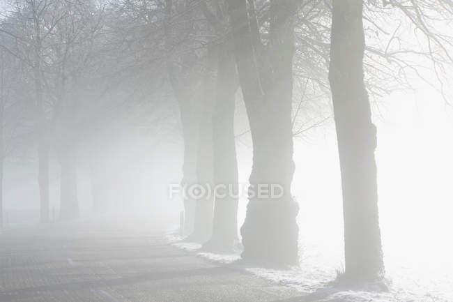 Пейзаж зимой на туманная погода — стоковое фото