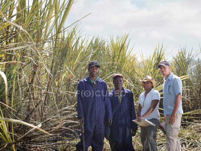 Sugar Cane Workers In Field — Stock Photo