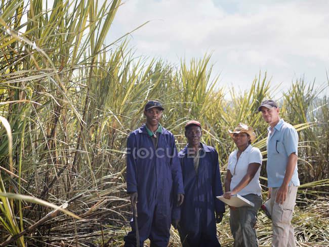 Trabalhadores da cana no campo — Fotografia de Stock