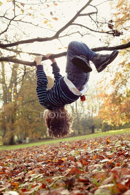 Junge spielt auf Baum im Freien, selektiver Fokus — Stockfoto