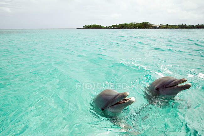 Bottlenose dolphins emerging from sea — Stock Photo