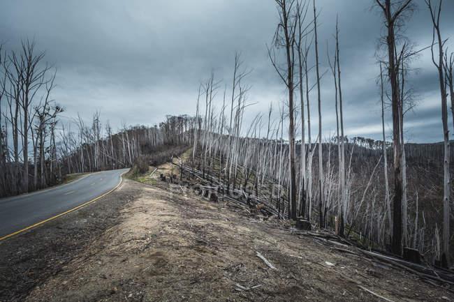 Дороги, тягнуться крізь спалили дерев під хмарного неба — стокове фото